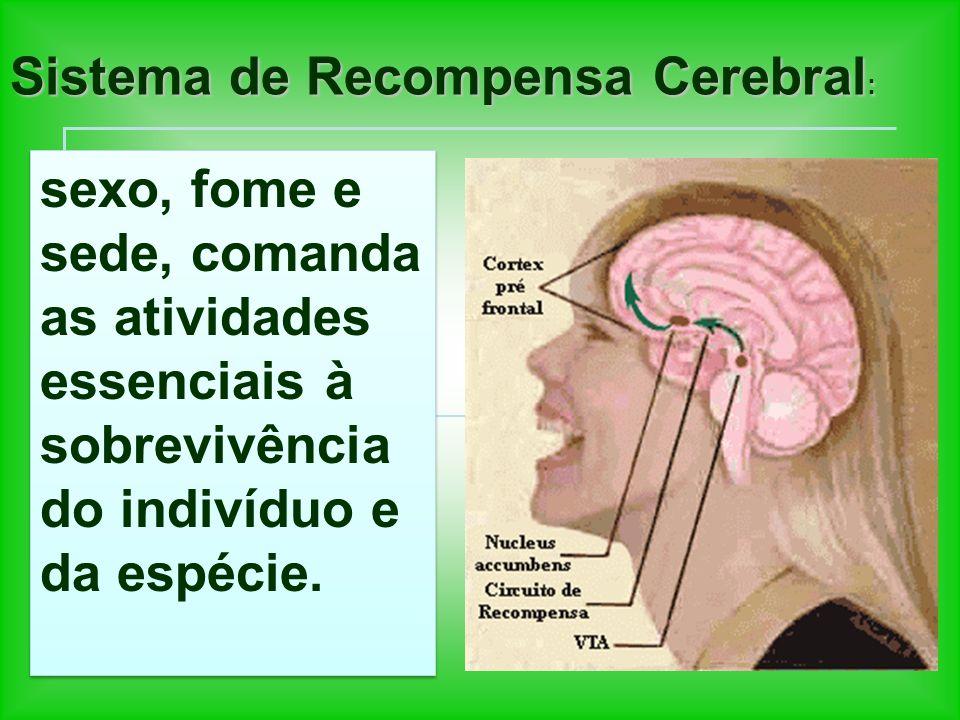 Sistema de Recompensa Cerebral: