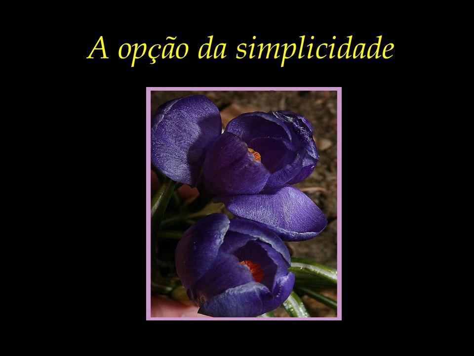 A opção da simplicidade