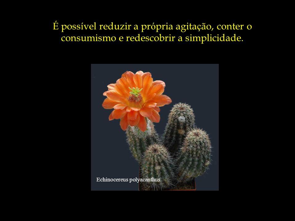 É possível reduzir a própria agitação, conter o consumismo e redescobrir a simplicidade.