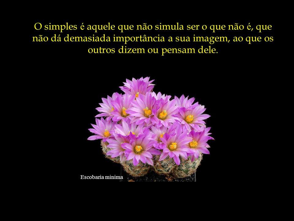 O simples é aquele que não simula ser o que não é, que não dá demasiada importância a sua imagem, ao que os outros dizem ou pensam dele.