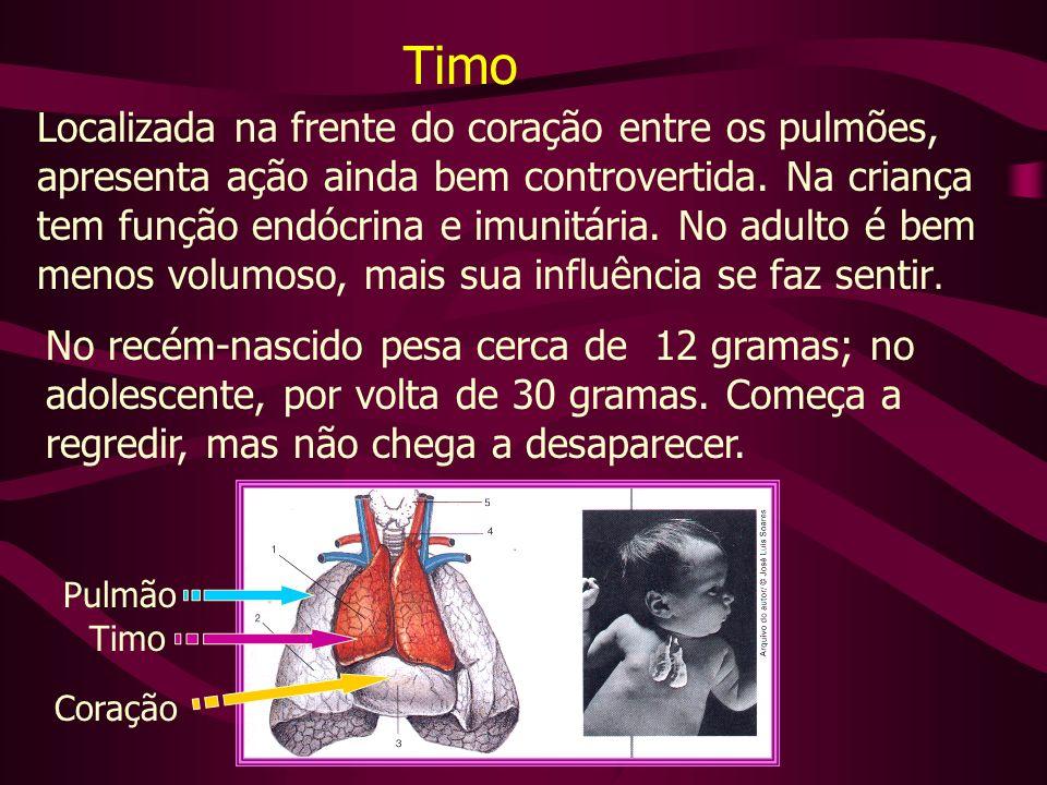 Timo Localizada na frente do coração entre os pulmões,