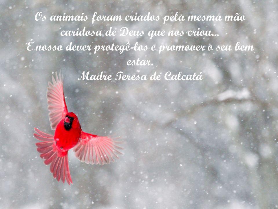 Os animais foram criados pela mesma mão caridosa de Deus que nos criou