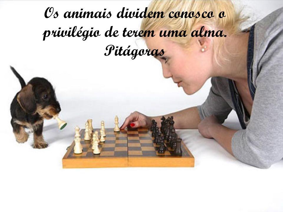 Os animais dividem conosco o privilégio de terem uma alma. Pitágoras