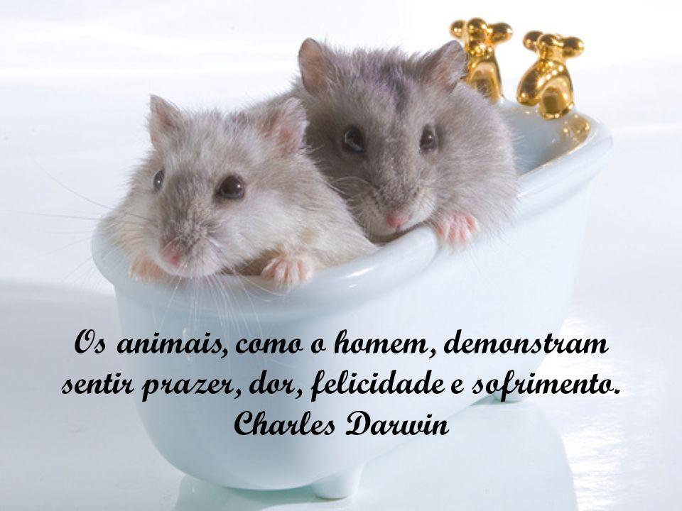 Os animais, como o homem, demonstram sentir prazer, dor, felicidade e sofrimento. Charles Darwin