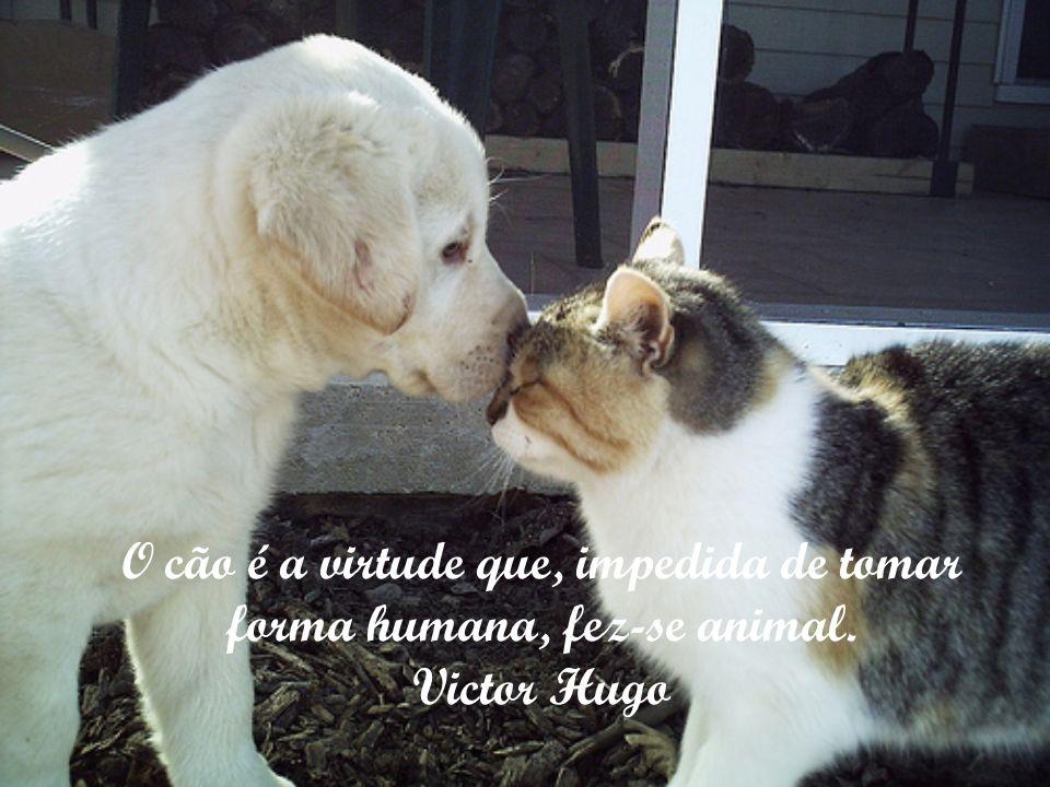 O cão é a virtude que, impedida de tomar forma humana, fez-se animal