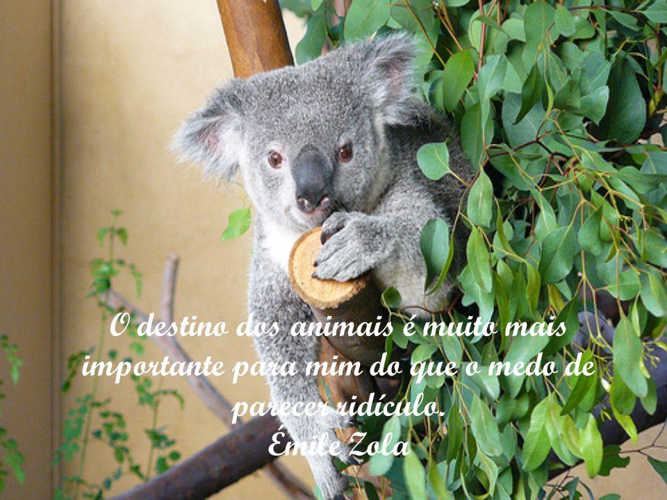 O destino dos animais é muito mais importante para mim do que o medo de parecer ridículo. Émile Zola