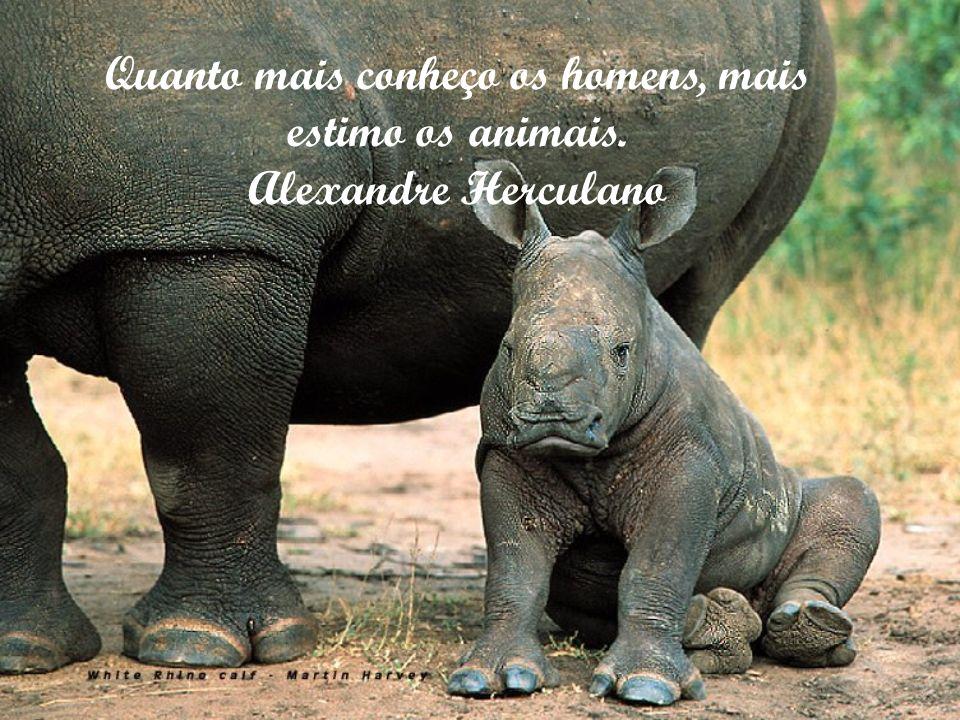 Quanto mais conheço os homens, mais estimo os animais