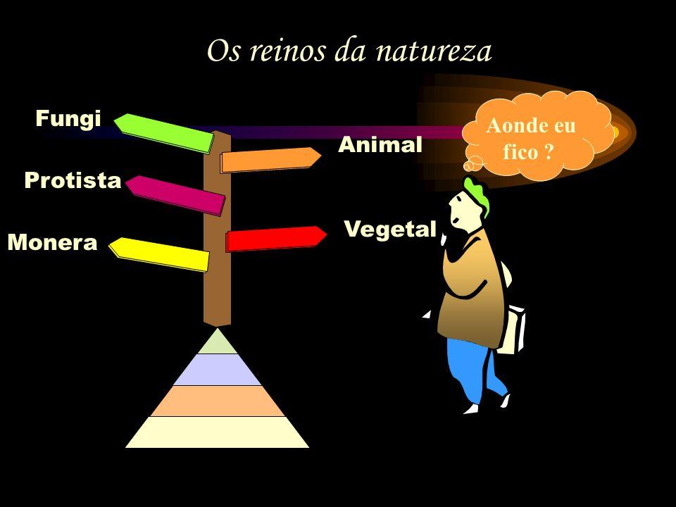 Os reinos da natureza Fungi Aonde eu fico Animal Protista Vegetal