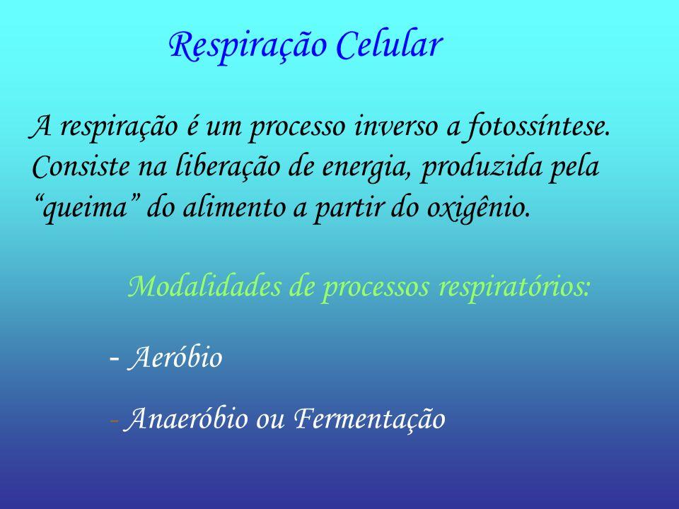 Respiração Celular A respiração é um processo inverso a fotossíntese.