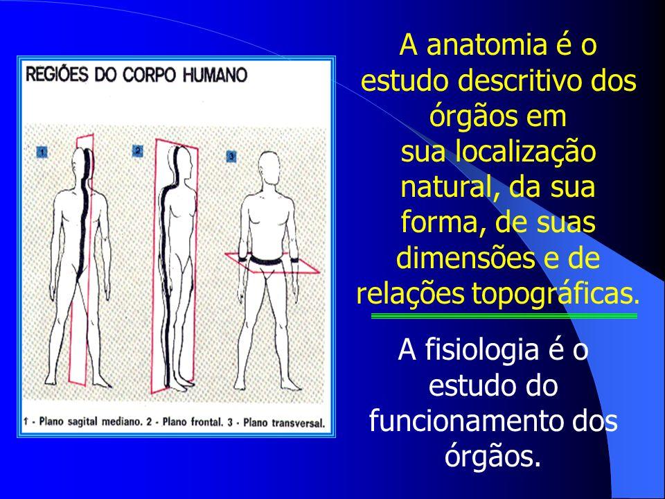A anatomia é o estudo descritivo dos órgãos em