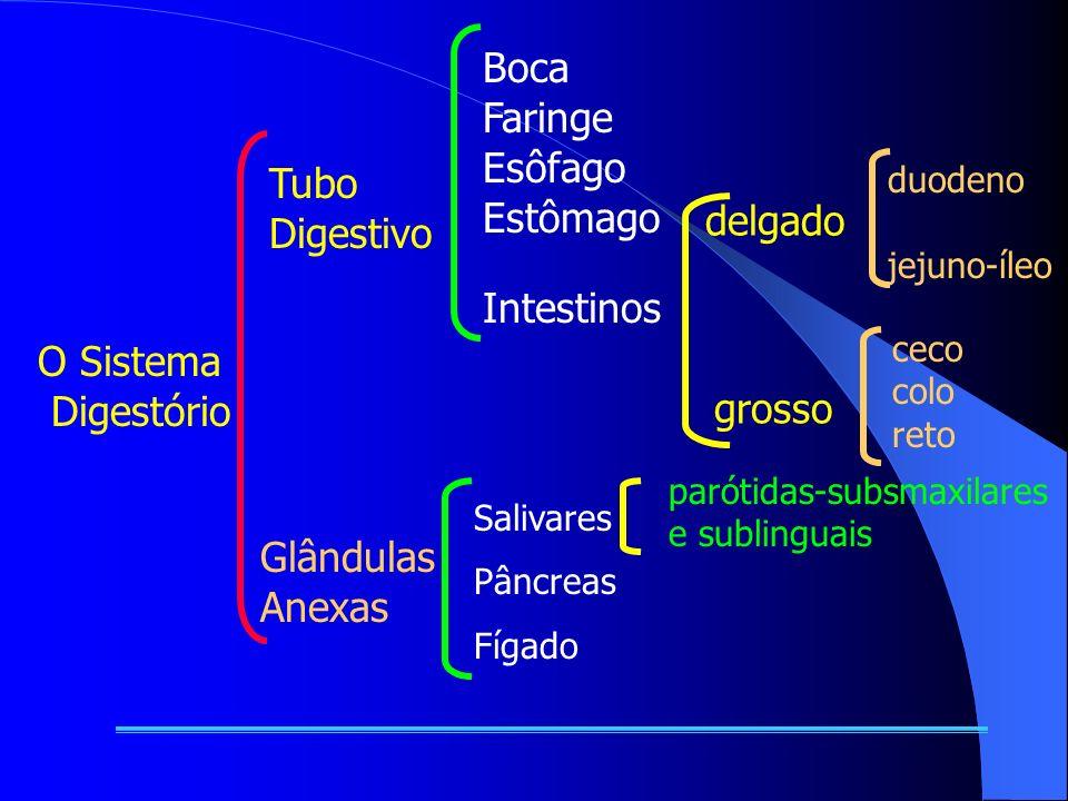 Boca Faringe Esôfago Estômago Tubo Digestivo delgado Intestinos