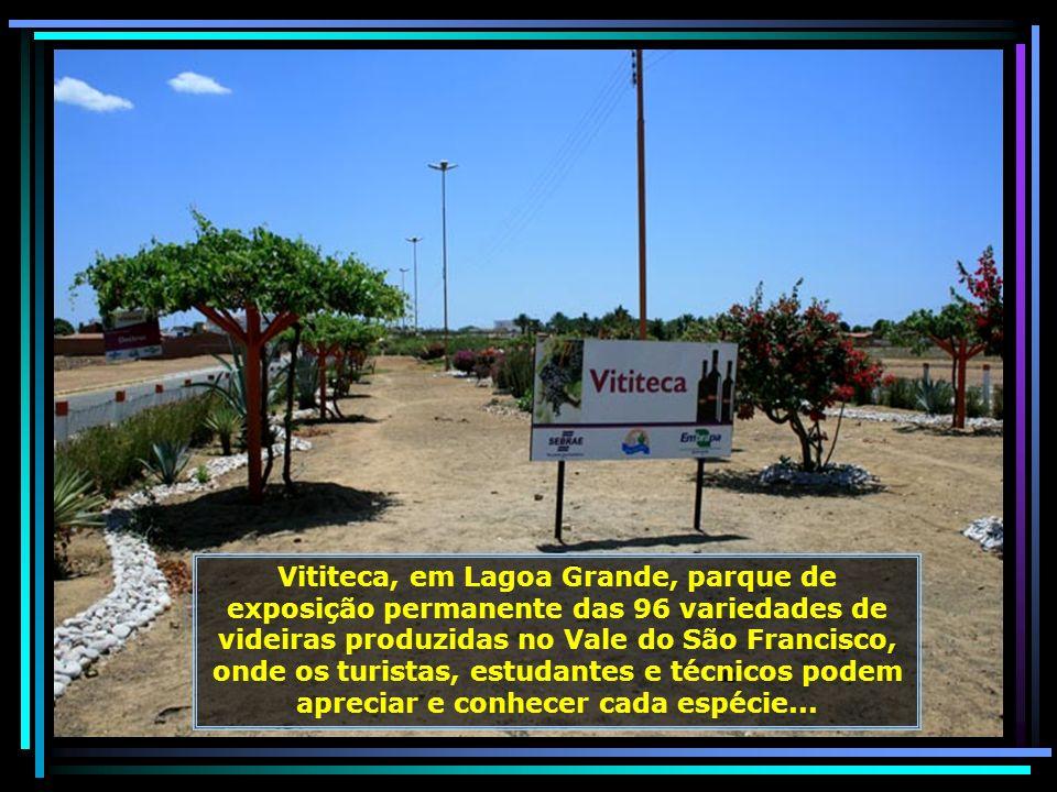 IMG_6691 - LAGOA GRANDE - RECINTO DA VITITECA-680