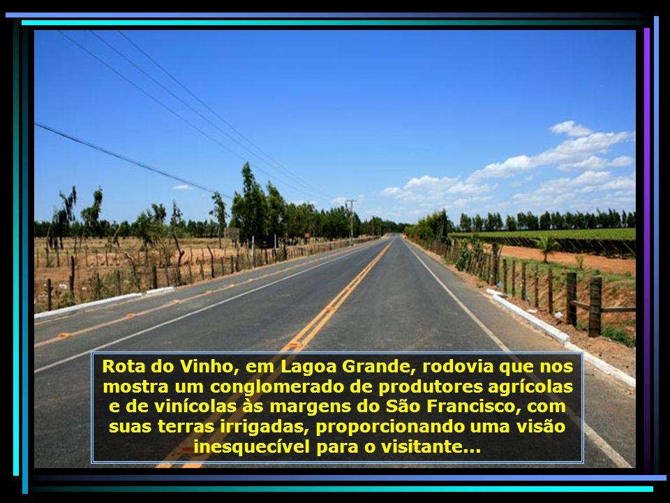 IMG_6738 - LAGOA GRANDE - ROTA DA UVA E DO VINHO-680