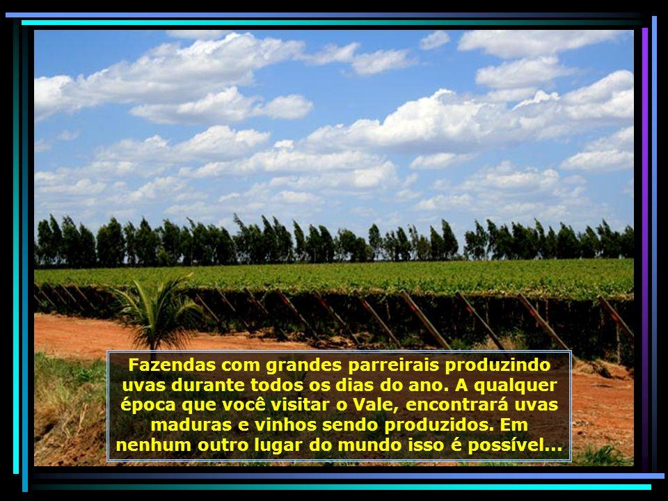 IMG_6741 - LAGOA GRANDE - ROTA DA UVA E DO VINHO-680