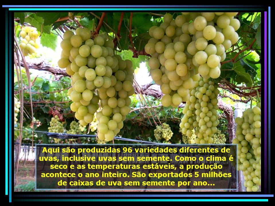 P0015574 - PETROLINA - PRODUÇÃO DE UVAS-680