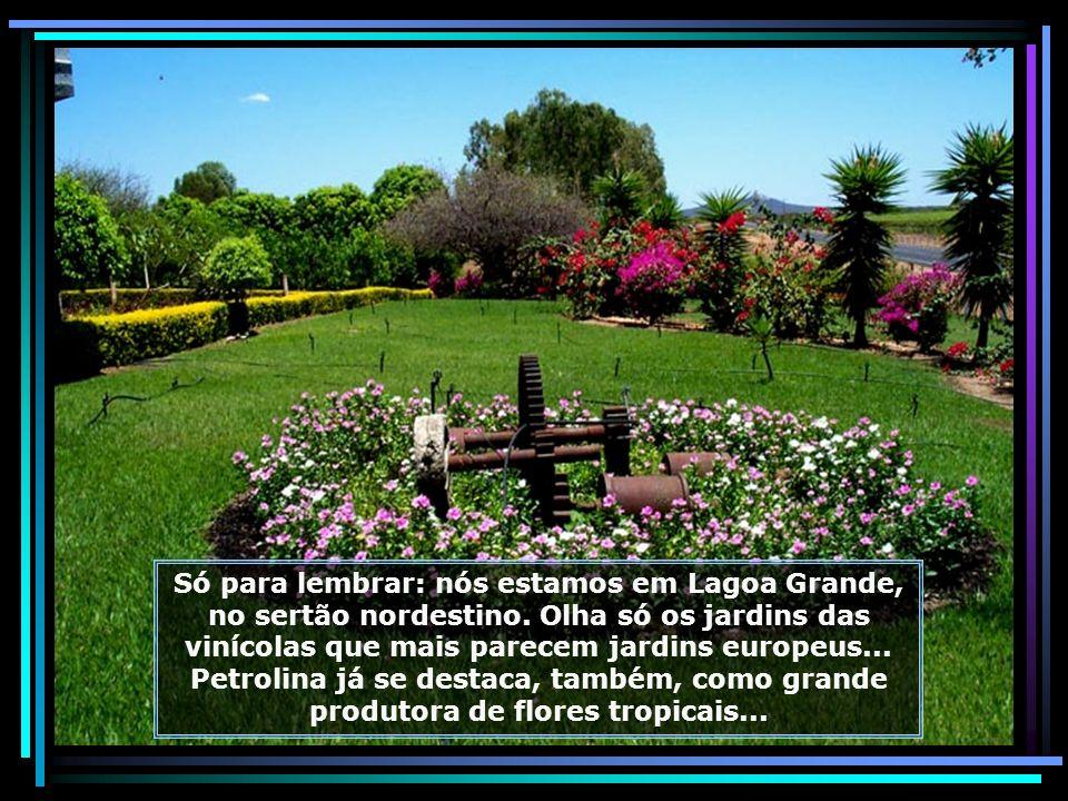 P0015586 - LAGOA GRANDE - ROTA DA UVA E DO VINHO - FAZENDA GARIBALDINA-680