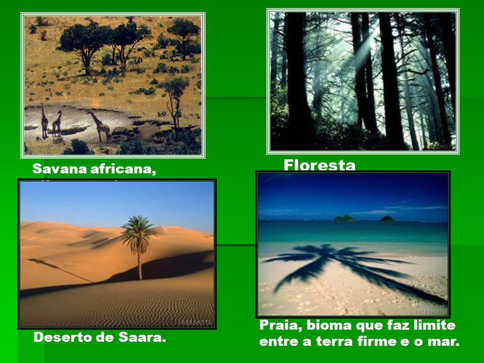 Floresta Savana africana, clima quente e seco.
