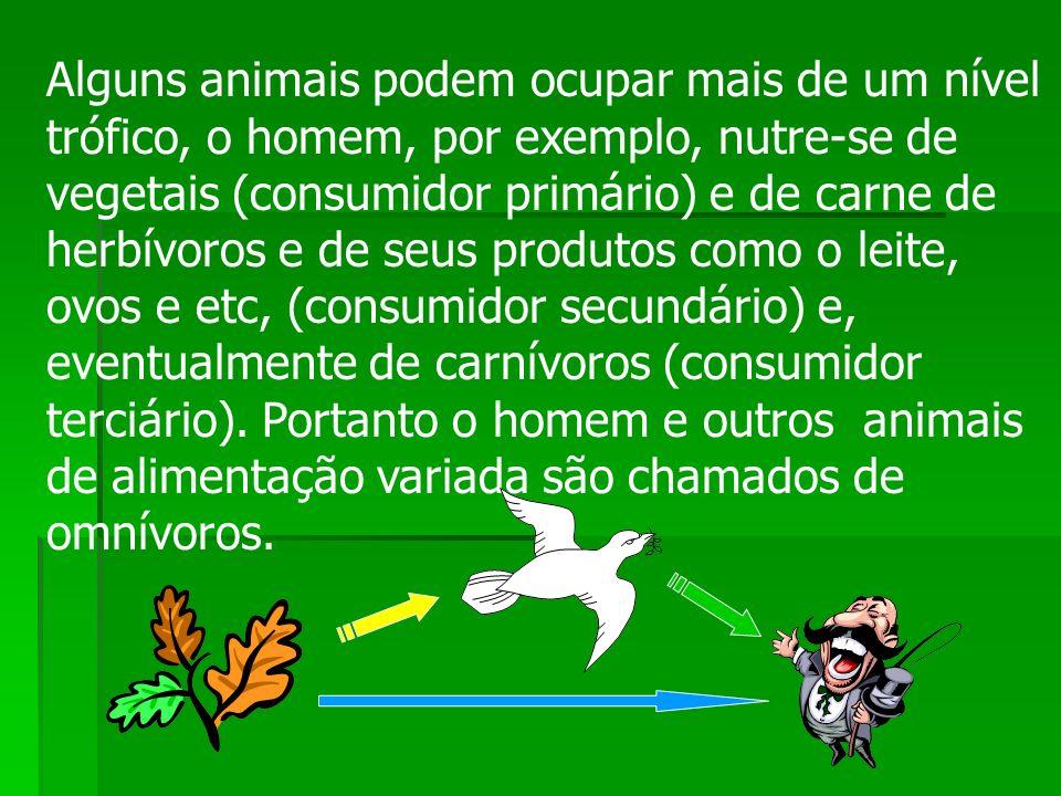 Alguns animais podem ocupar mais de um nível