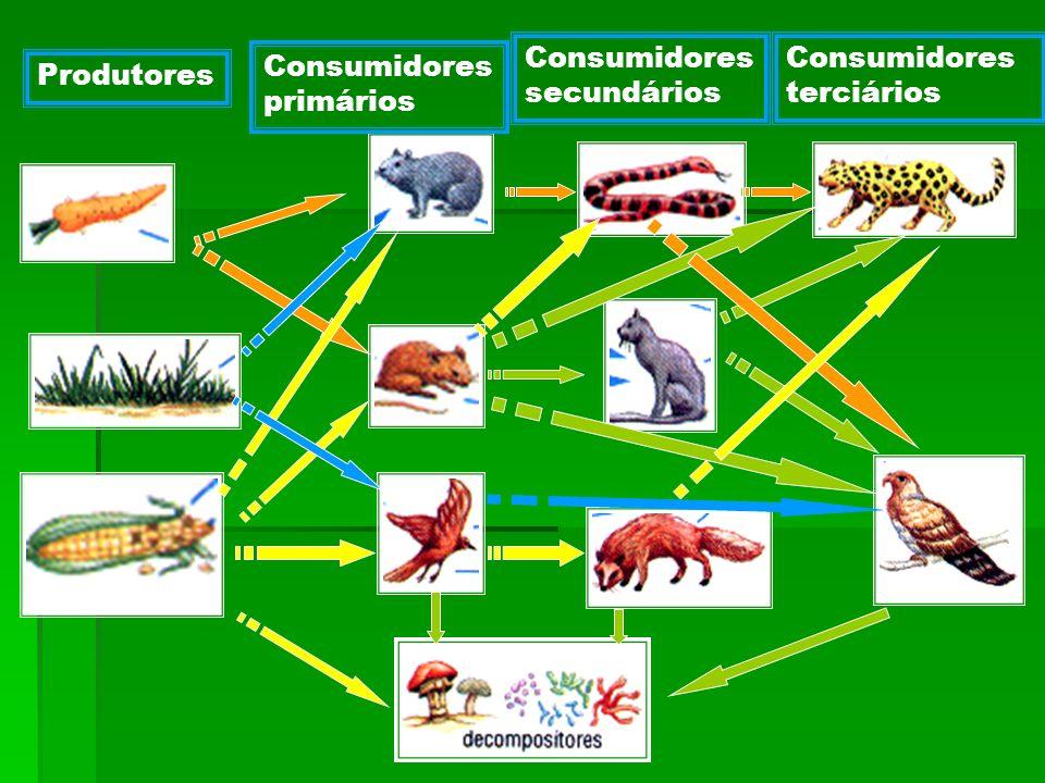 Consumidores secundários Consumidores terciários Consumidores primários Produtores