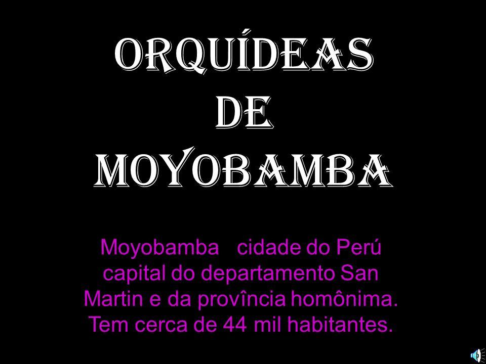 Orquídeas de MOYOBAMBA