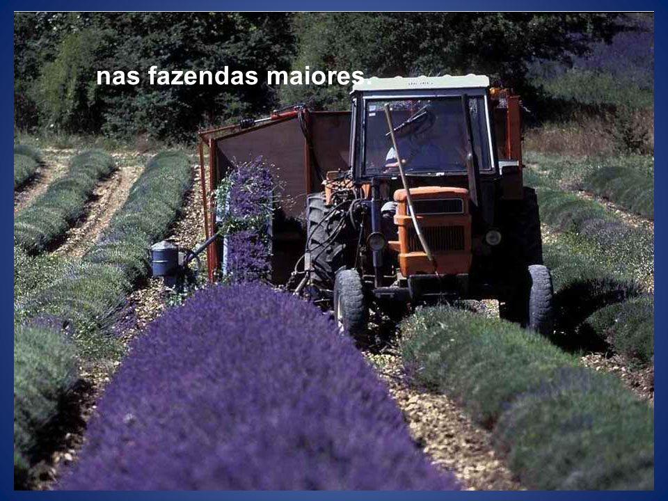 nas fazendas maiores.