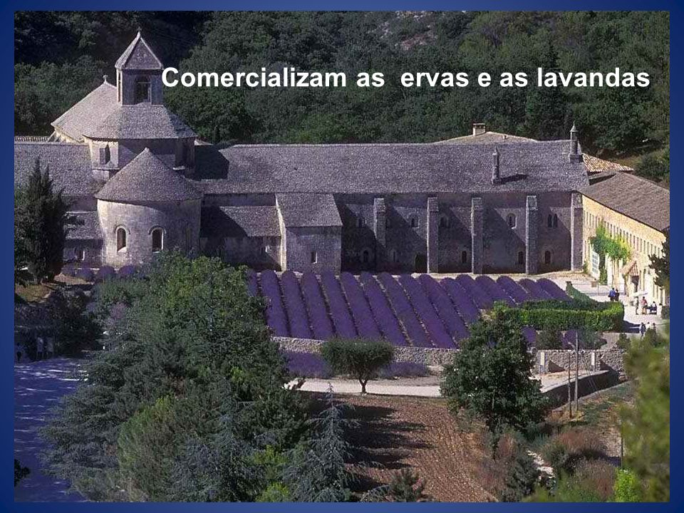 Comercializam as ervas e as lavandas