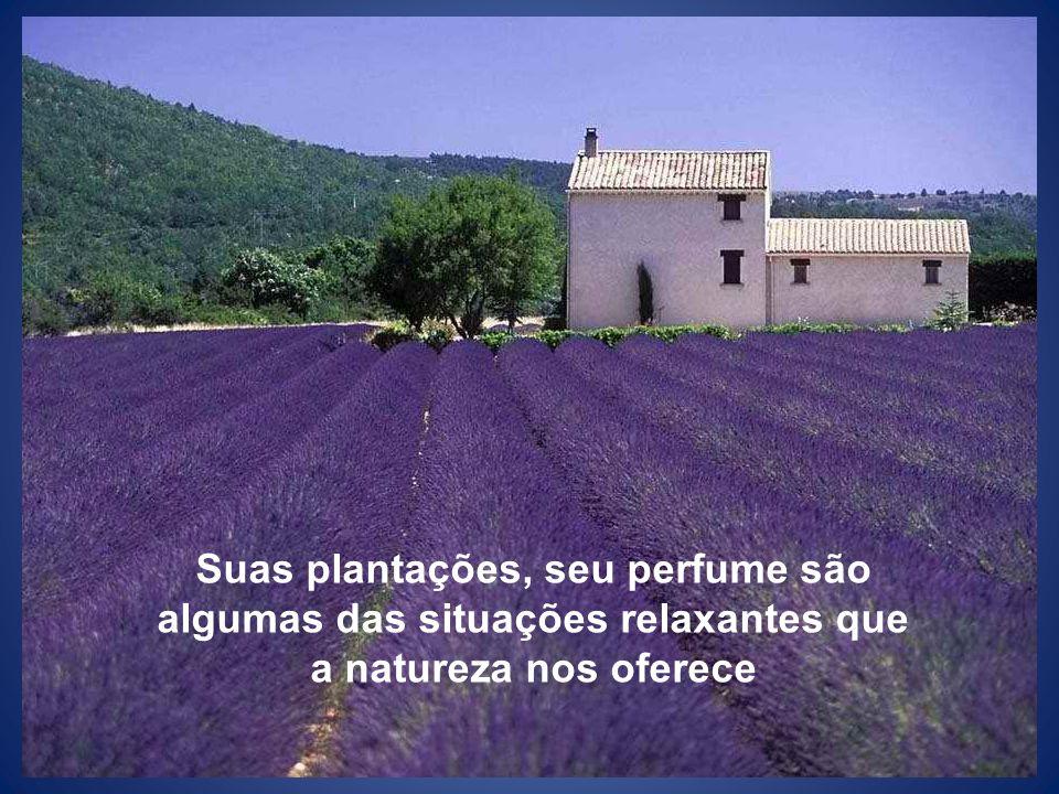 Suas plantações, seu perfume são algumas das situações relaxantes que a natureza nos oferece