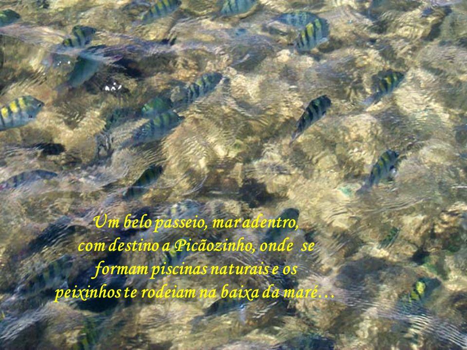 Um belo passeio, mar adentro, com destino a Picãozinho, onde se