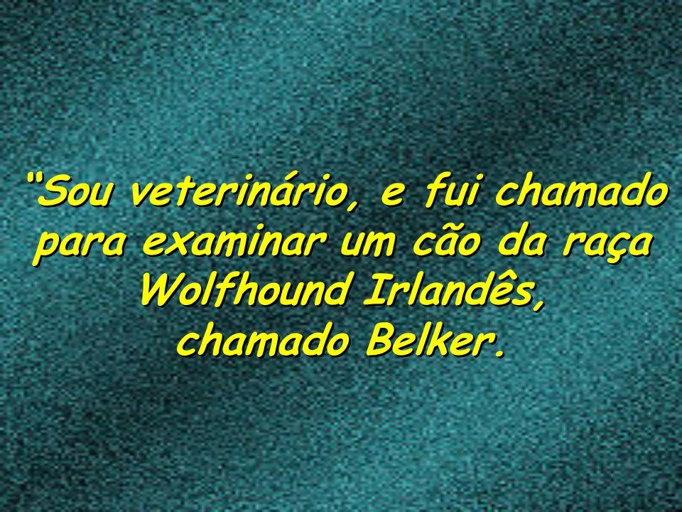 Sou veterinário, e fui chamado para examinar um cão da raça Wolfhound Irlandês, chamado Belker.