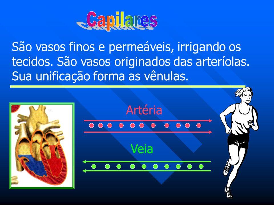 Capilares São vasos finos e permeáveis, irrigando os tecidos. São vasos originados das arteríolas. Sua unificação forma as vênulas.