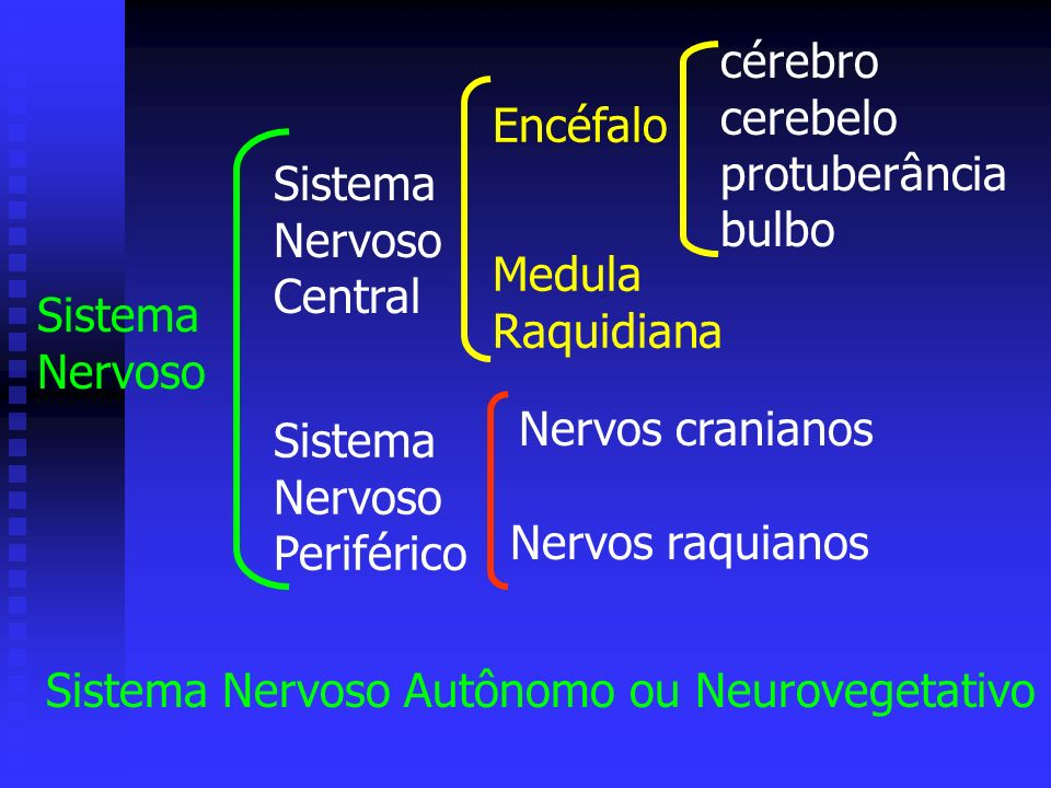 cérebro cerebelo. protuberância. bulbo. Encéfalo. Sistema. Nervoso. Central. Medula. Raquidiana.