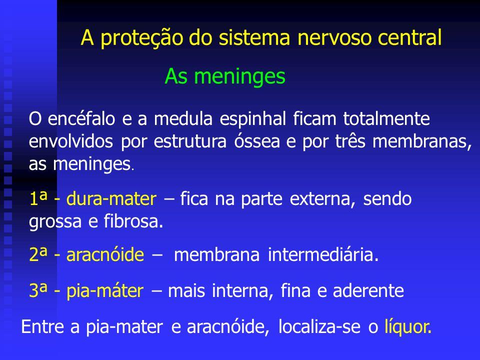 A proteção do sistema nervoso central