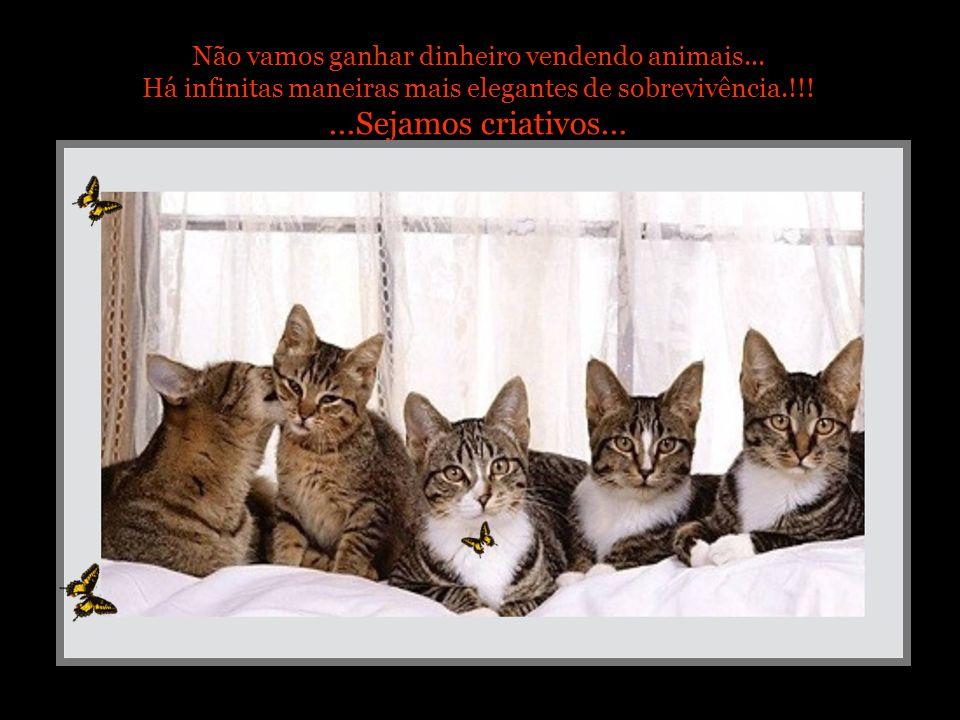 ...Sejamos criativos... Não vamos ganhar dinheiro vendendo animais...