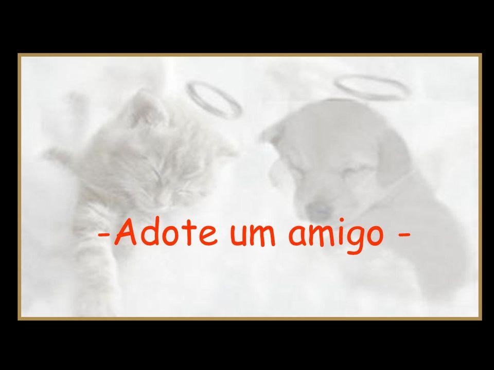 -Adote um amigo -