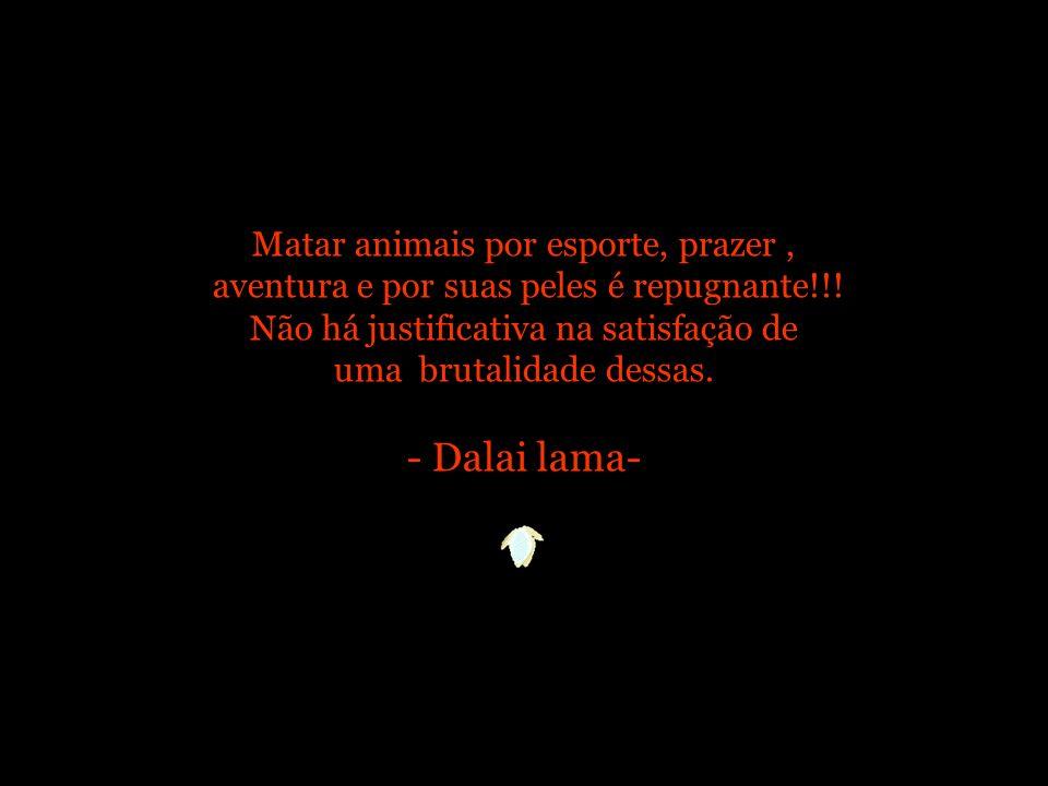 Matar animais por esporte, prazer , aventura e por suas peles é repugnante!!.