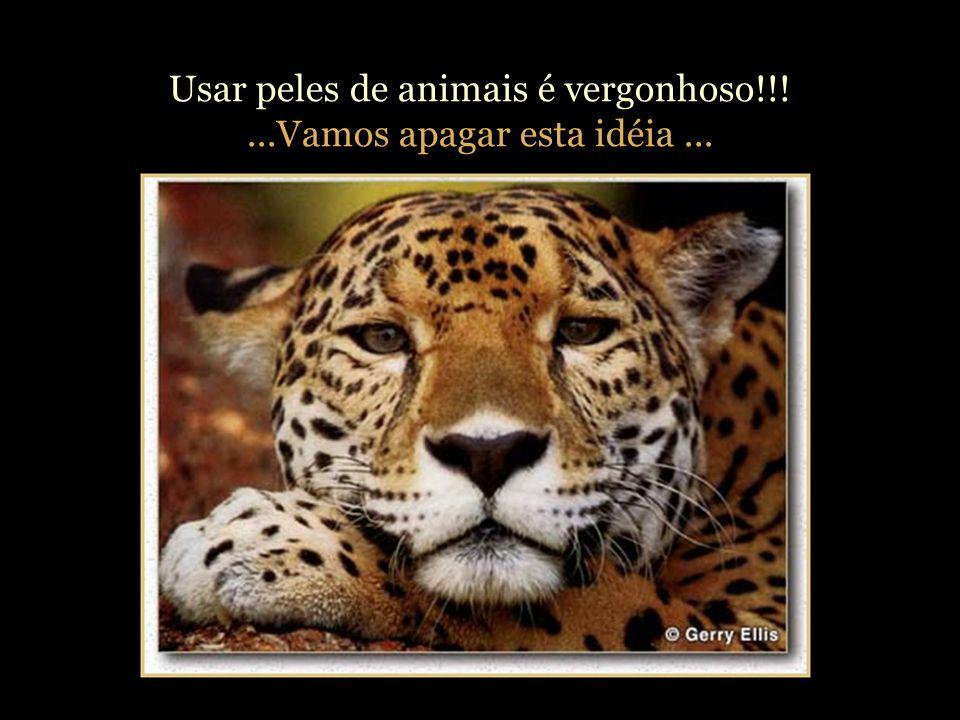 Usar peles de animais é vergonhoso!!! ...Vamos apagar esta idéia ...