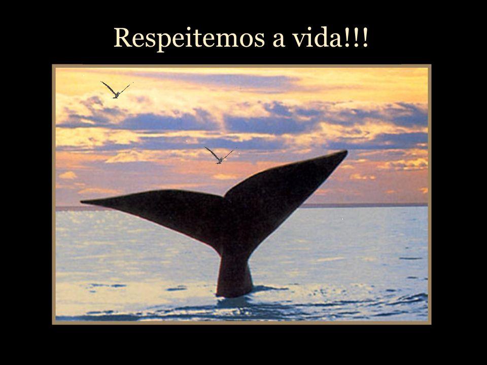 Respeitemos a vida!!!