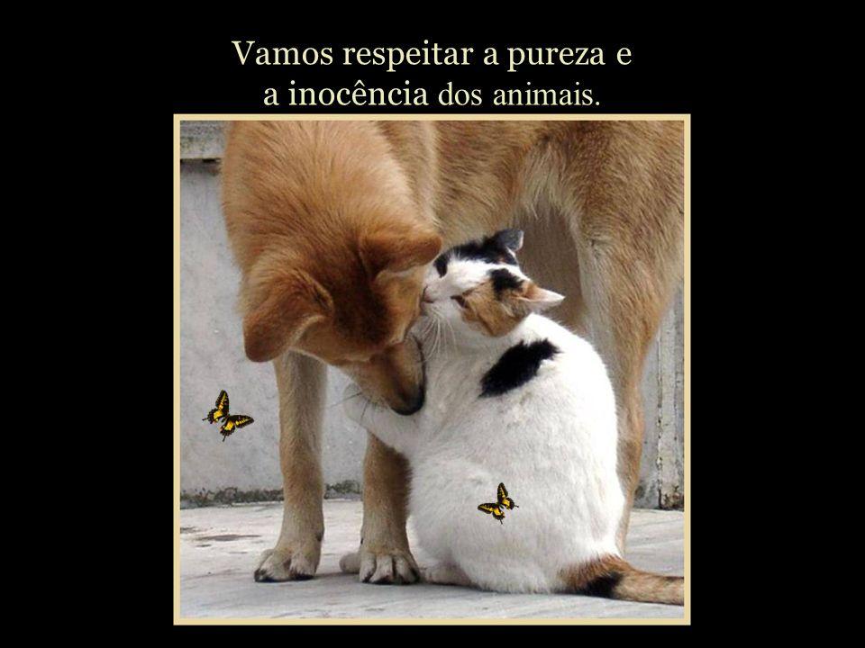 Vamos respeitar a pureza e a inocência dos animais.