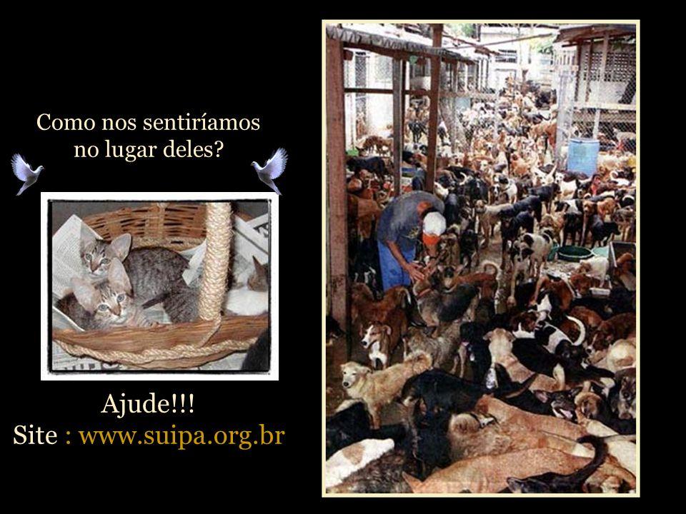 Como nos sentiríamos no lugar deles Ajude!!! Site : www.suipa.org.br