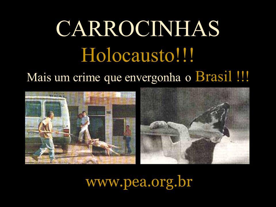CARROCINHAS Holocausto!!! Mais um crime que envergonha o Brasil !!!