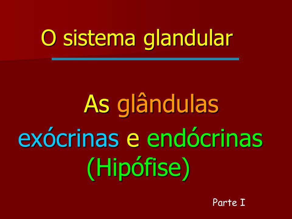 As glândulas exócrinas e endócrinas