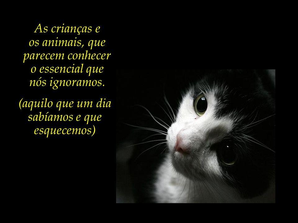 os animais, que parecem conhecer o essencial que nós ignoramos.