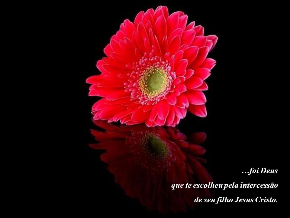 …foi Deus que te escolheu pela intercessão de seu filho Jesus Cristo.