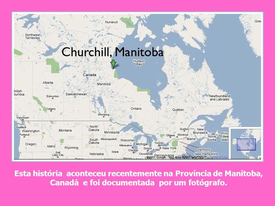 Esta história aconteceu recentemente na Província de Manitoba, Canadá e foi documentada por um fotógrafo.