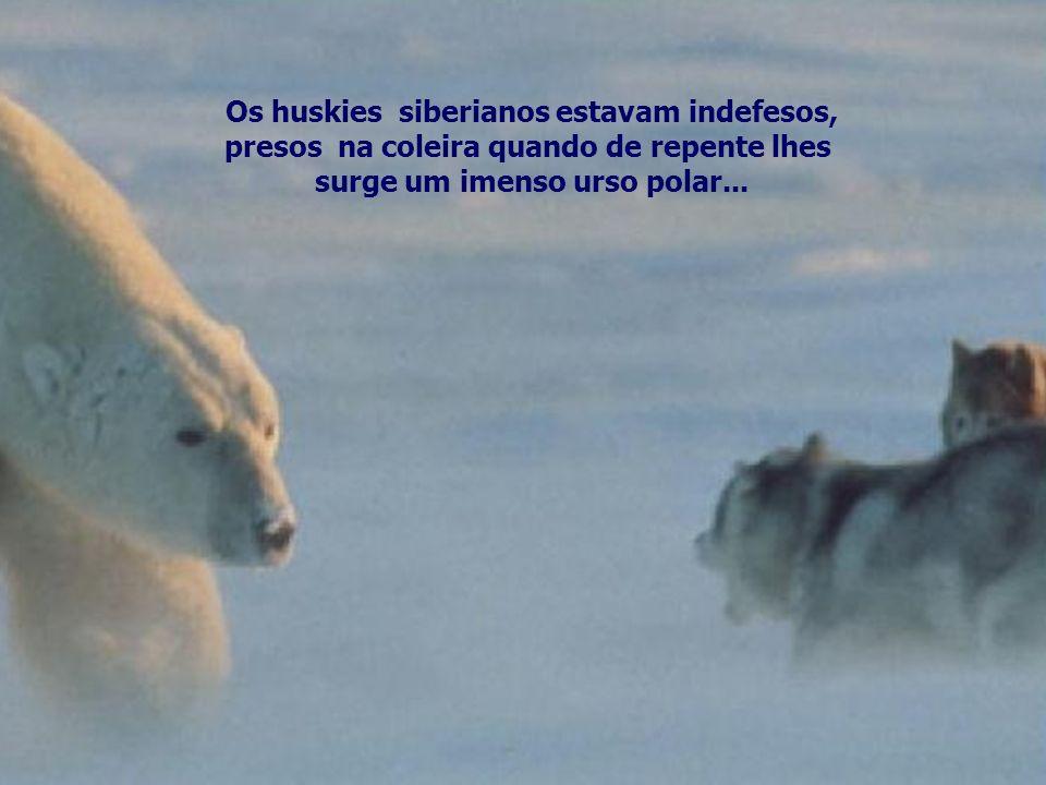 surge um imenso urso polar...