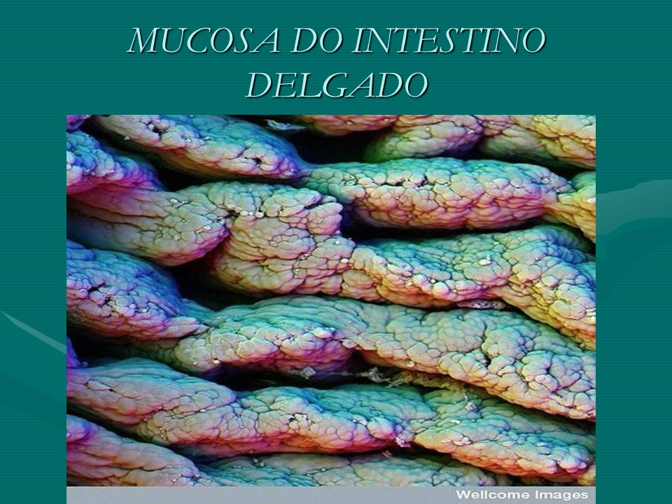 MUCOSA DO INTESTINO DELGADO