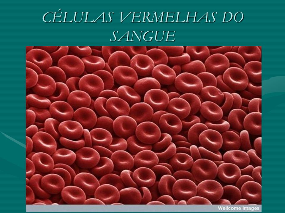 CÉLULAS VERMELHAS DO SANGUE