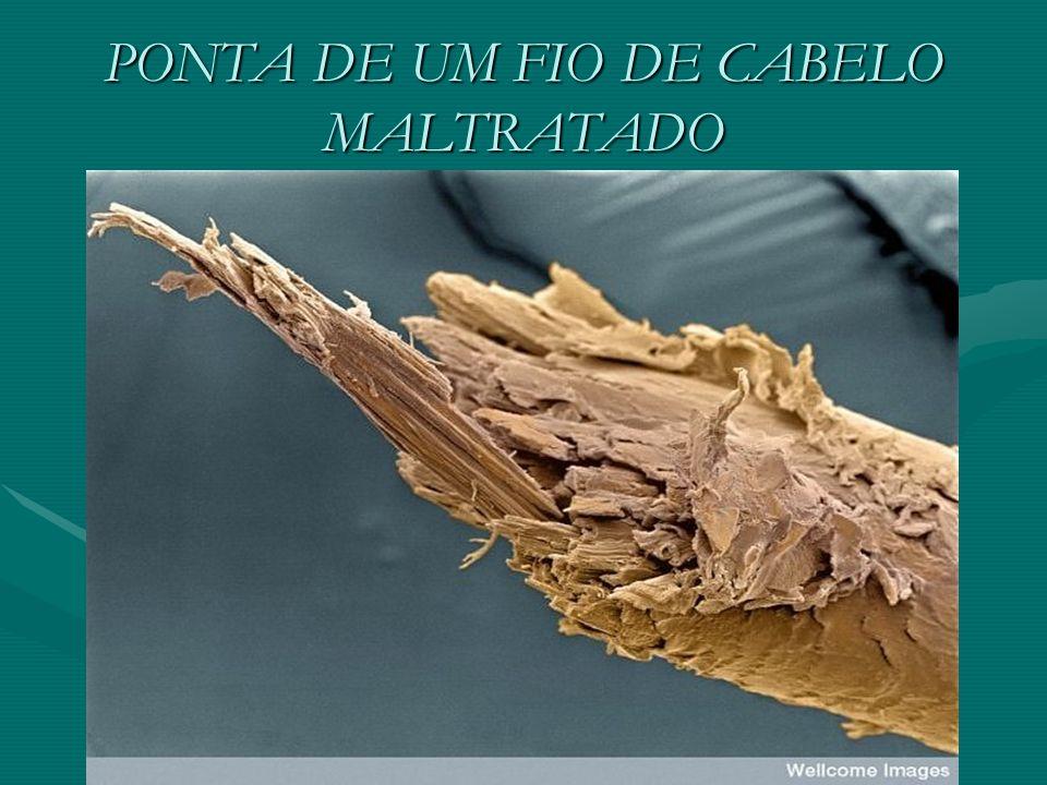 PONTA DE UM FIO DE CABELO MALTRATADO