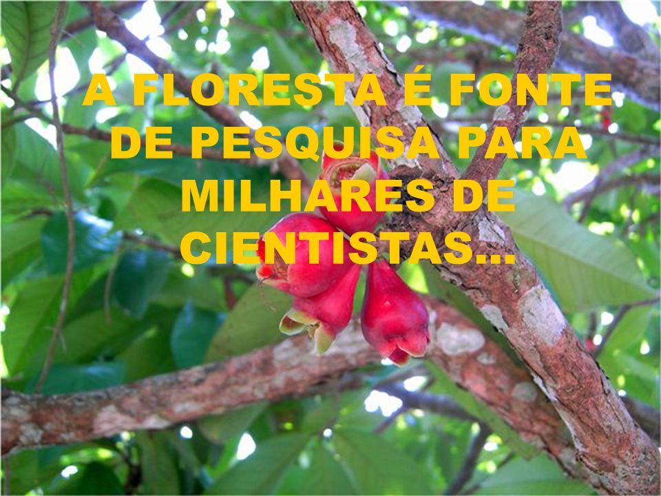 A FLORESTA É FONTE DE PESQUISA PARA MILHARES DE CIENTISTAS...