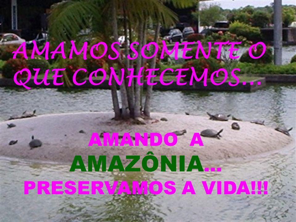 AMANDO A AMAZÔNIA... PRESERVAMOS A VIDA!!!